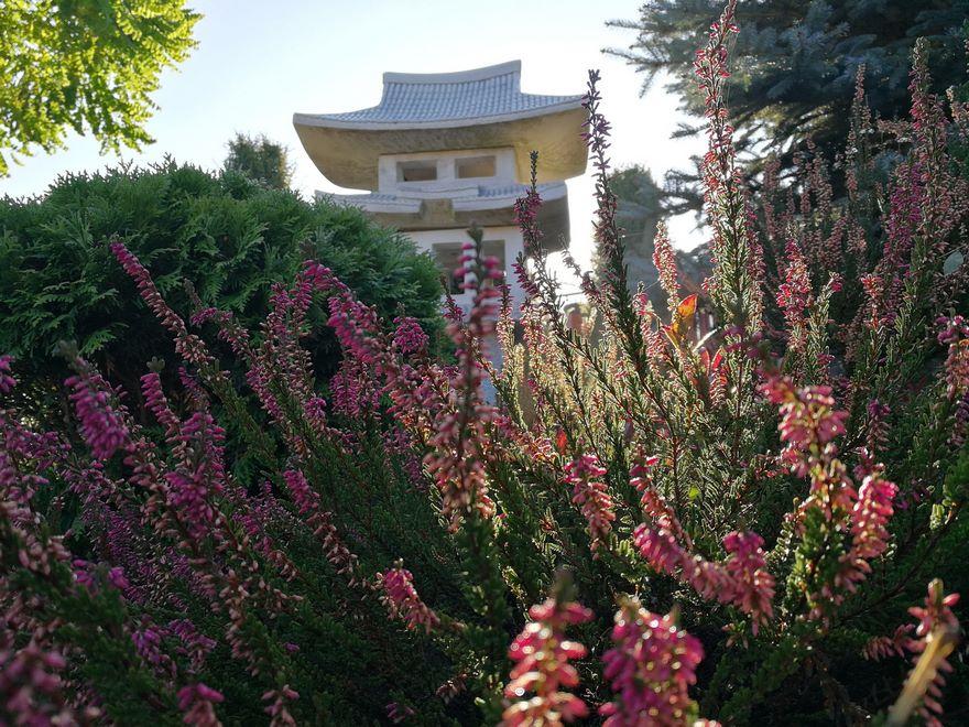 Budowa_ogrodów_pielegnacja_Hortland_projetkowanie_ogrodow_lublin-japonski3