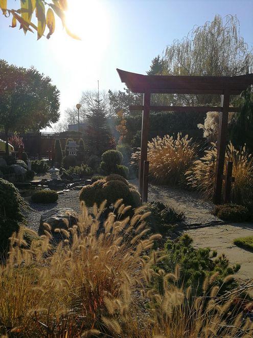 Budowa_ogrodów_pielegnacja_Hortland_projetkowanie_ogrodow_lublin-japonski5