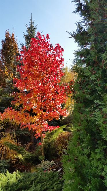 Ogrody-lublin-budowa_ogrodów_pielegnacja_Hortland_projetkowanie_ogrodow-jesien1