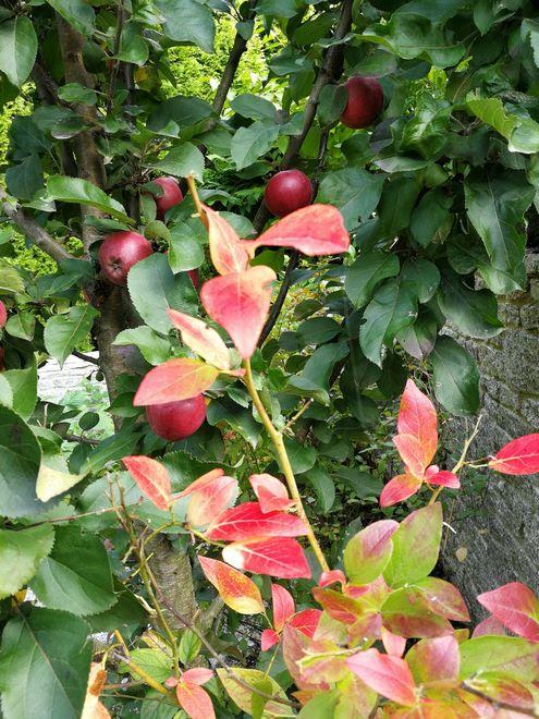 Ogrody-lublin-budowa_ogrodów_pielegnacja_Hortland_projetkowanie_ogrodow-jesien3