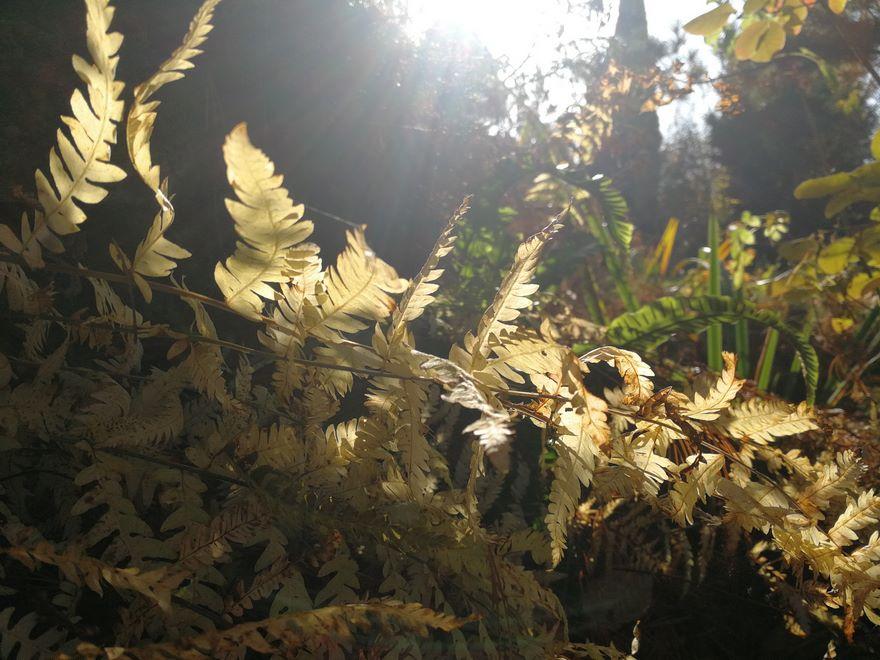 Ogrody-lublin-budowa_ogrodów_pielegnacja_Hortland_projetkowanie_ogrodow-jesien6