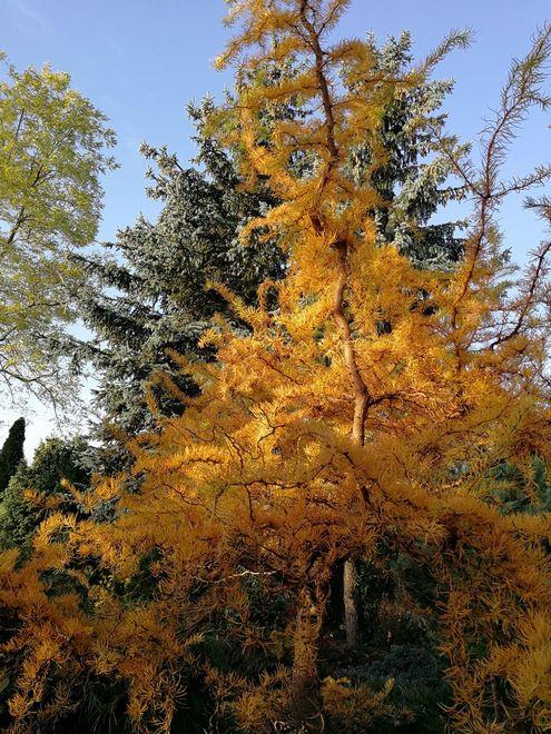 Ogrody-lublin-budowa_ogrodów_pielegnacja_Hortland_projetkowanie_ogrodow-jesien9