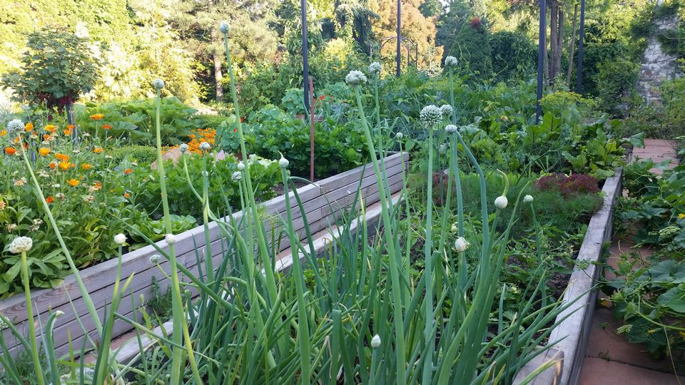 Ogrody-lublin-budowa_ogrodów_pielegnacja_Hortland_projetkowanie_ogrodow-ogrod-warzywny10