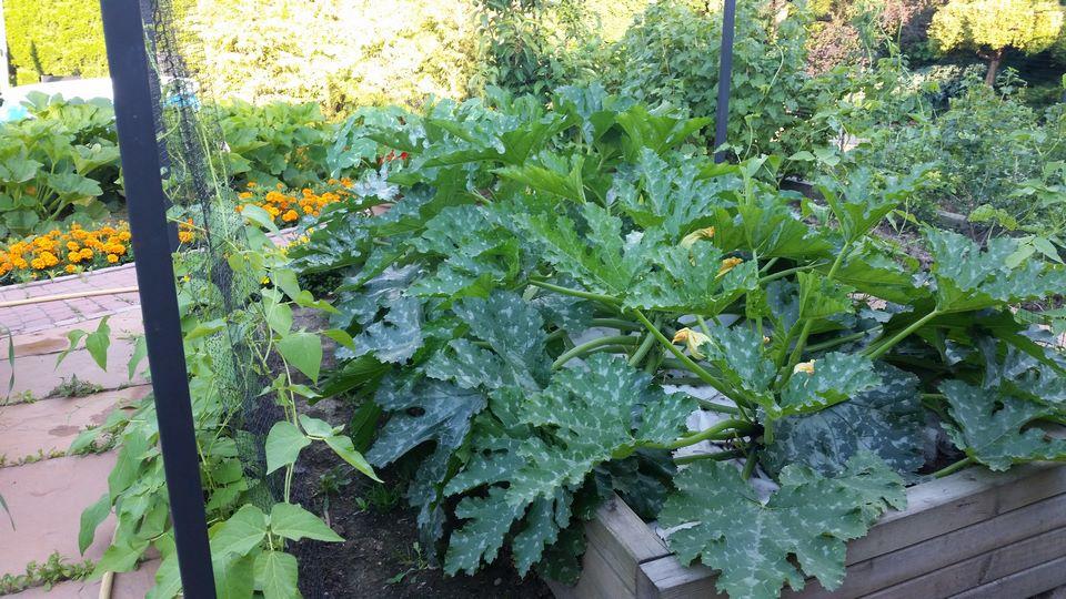 Ogrody-lublin-budowa_ogrodów_pielegnacja_Hortland_projetkowanie_ogrodow-ogrod-warzywny11