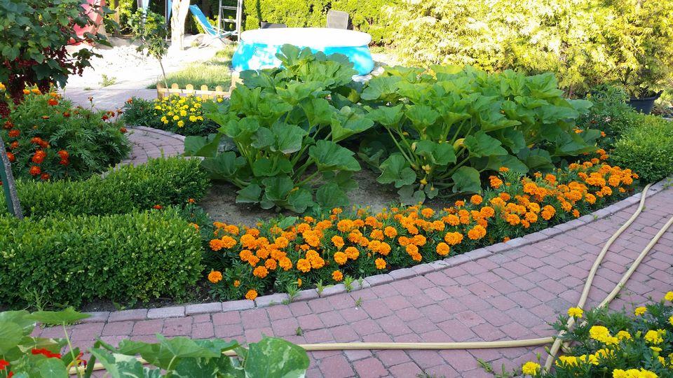Ogrody-lublin-budowa_ogrodów_pielegnacja_Hortland_projetkowanie_ogrodow-ogrod-warzywny12