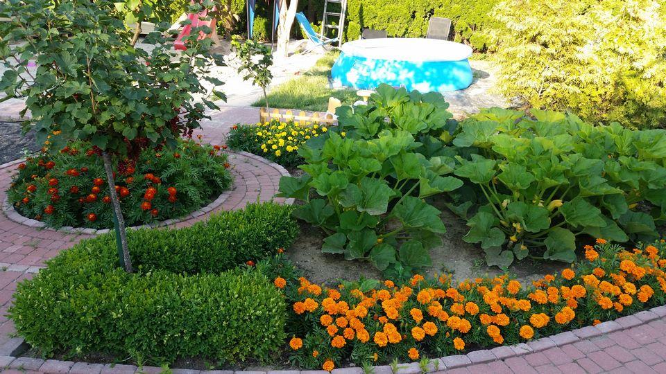 Ogrody-lublin-budowa_ogrodów_pielegnacja_Hortland_projetkowanie_ogrodow-ogrod-warzywny13