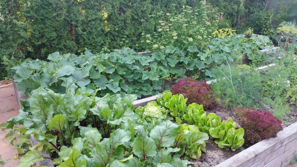 Ogrody-lublin-budowa_ogrodów_pielegnacja_Hortland_projetkowanie_ogrodow-ogrod-warzywny14