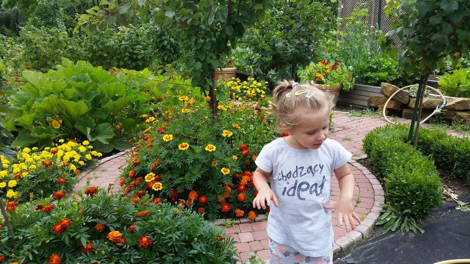 Ogrody-lublin-budowa_ogrodów_pielegnacja_Hortland_projetkowanie_ogrodow-ogrod-warzywny15