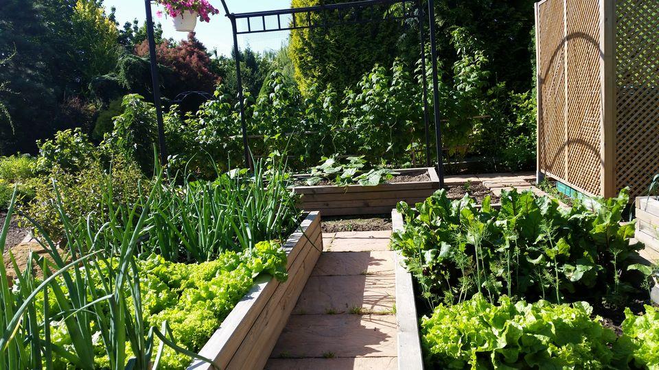 Ogrody-lublin-budowa_ogrodów_pielegnacja_Hortland_projetkowanie_ogrodow-ogrod-warzywny2