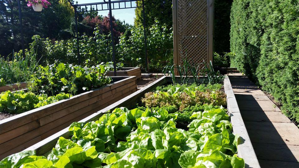 Ogrody-lublin-budowa_ogrodów_pielegnacja_Hortland_projetkowanie_ogrodow-ogrod-warzywny3