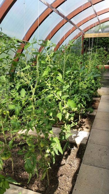 Ogrody-lublin-budowa_ogrodów_pielegnacja_Hortland_projetkowanie_ogrodow-ogrod-warzywny6