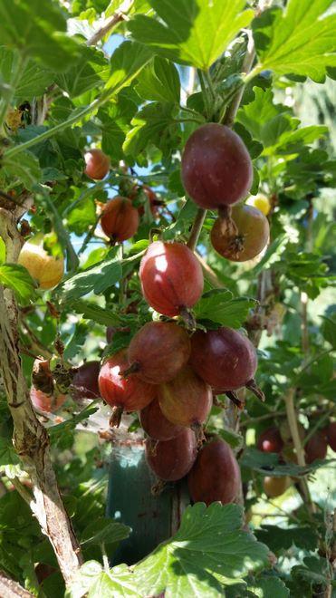 Ogrody-lublin-budowa_ogrodów_pielegnacja_Hortland_projetkowanie_ogrodow-ogrod-warzywny9