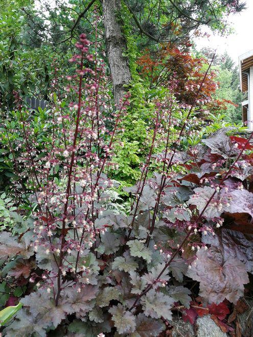 rośliny ogrodowe Hortland