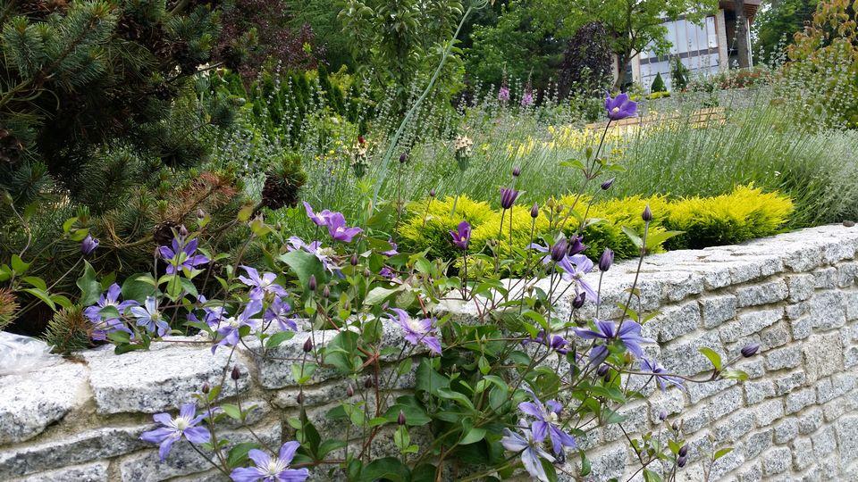 Ogrody-lublin-budowa_ogrodów_pielegnacja_Hortland_projetkowanie_ogrodow_naleczow13